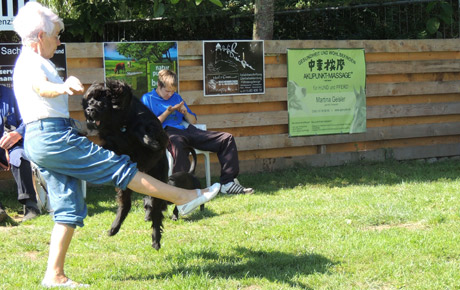 Hundeschule Schlage | Dogdance and Trickdogs